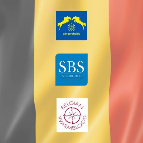 Studbooks belges